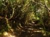 Aufstieg zum Caldeira-Rundweg
