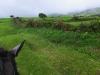 Grüne Weiden und wolkenverhangene Höhen