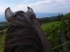 Meerblick, rechts unten der Castelo branco