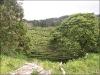 São Miguel - Gorreana Teeplantage