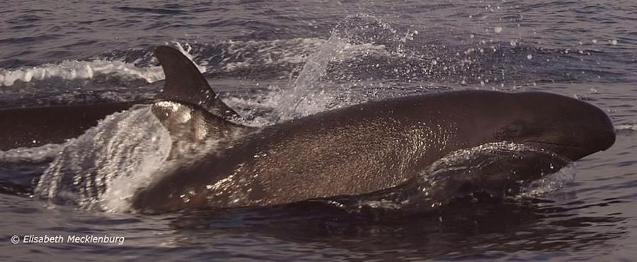 Ein Wal aus direkter Nähe fotografiert von Elisabeth Mecklenburg