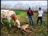 Quinta da Meia Eira - Landwirtschaft