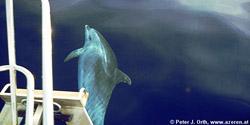 Delphinbegleitung