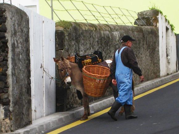 Esel in Água de Pau