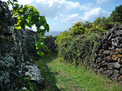 Weg zwischen Gärten