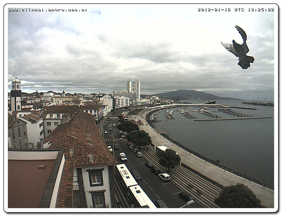 Vogel vor der Webcam in Ponta Delgada
