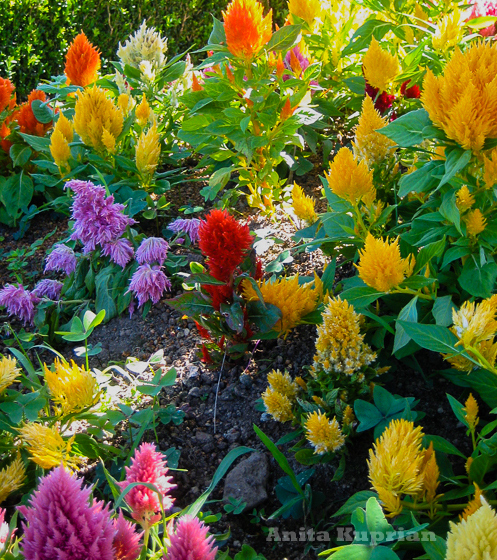 Anita Kuprian - Blütenpracht bei Nordeste