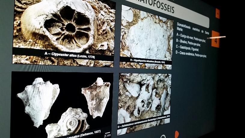Umfangreiche Infos zu Fossilien und zur Geologie der Azoren